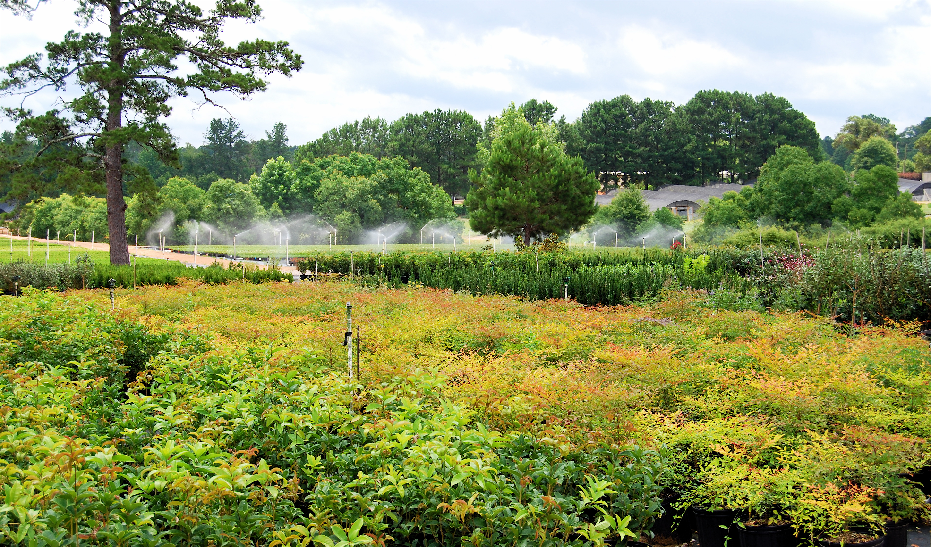 Forest Hill Louisiana Whole Nursery Plants
